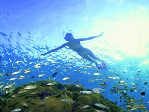 Snorkelen met vissen
