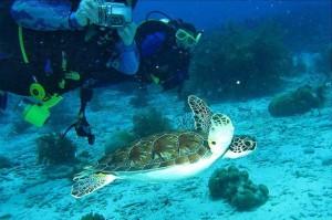 Schildpadden Bonaire