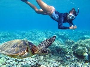 snorkelen schildpad bonaire